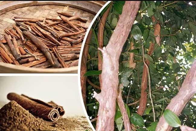 Что такое дерево корица
